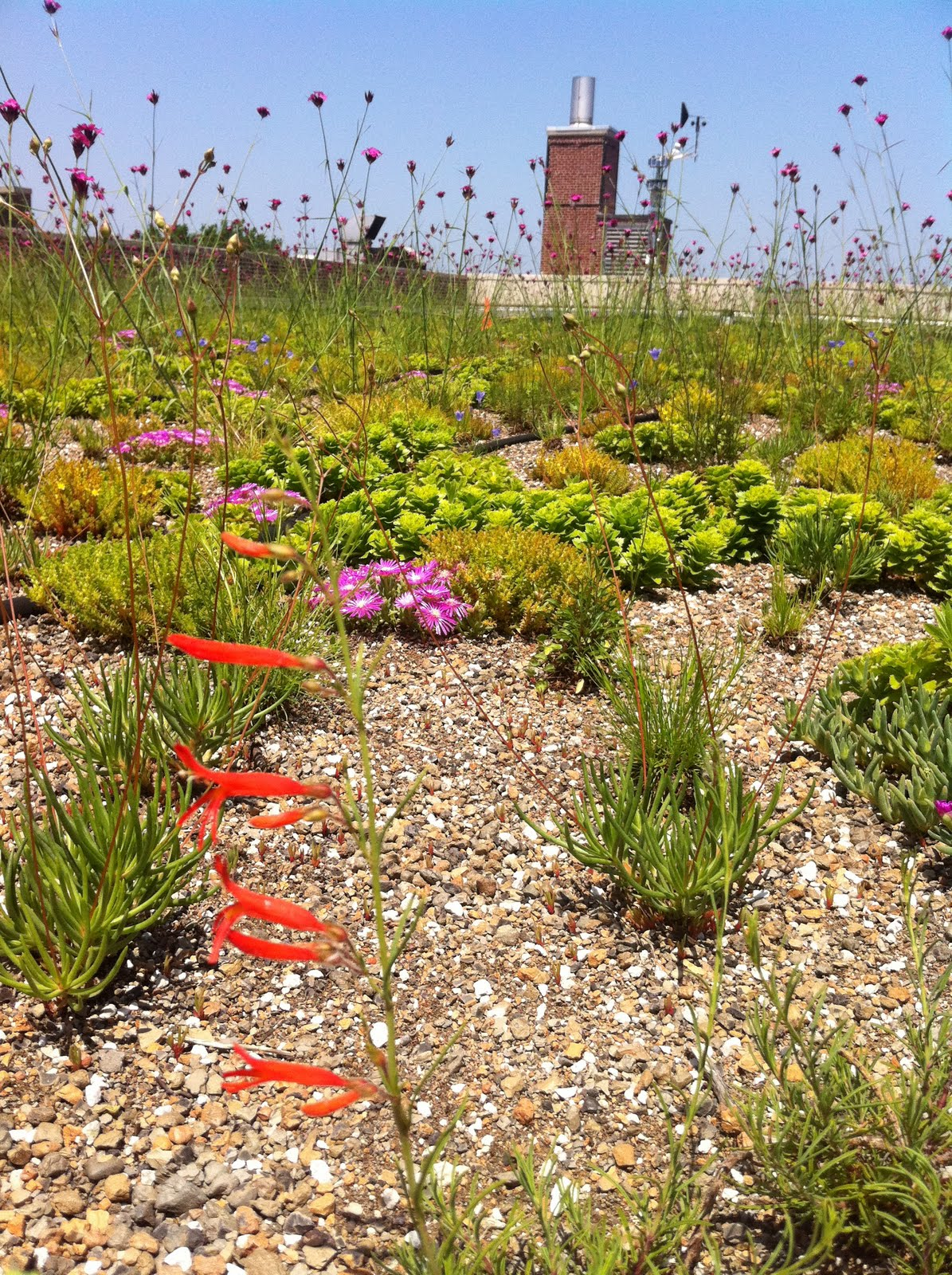 recover-green-roofs-public-school-roof-NYC-2010-12.jpg