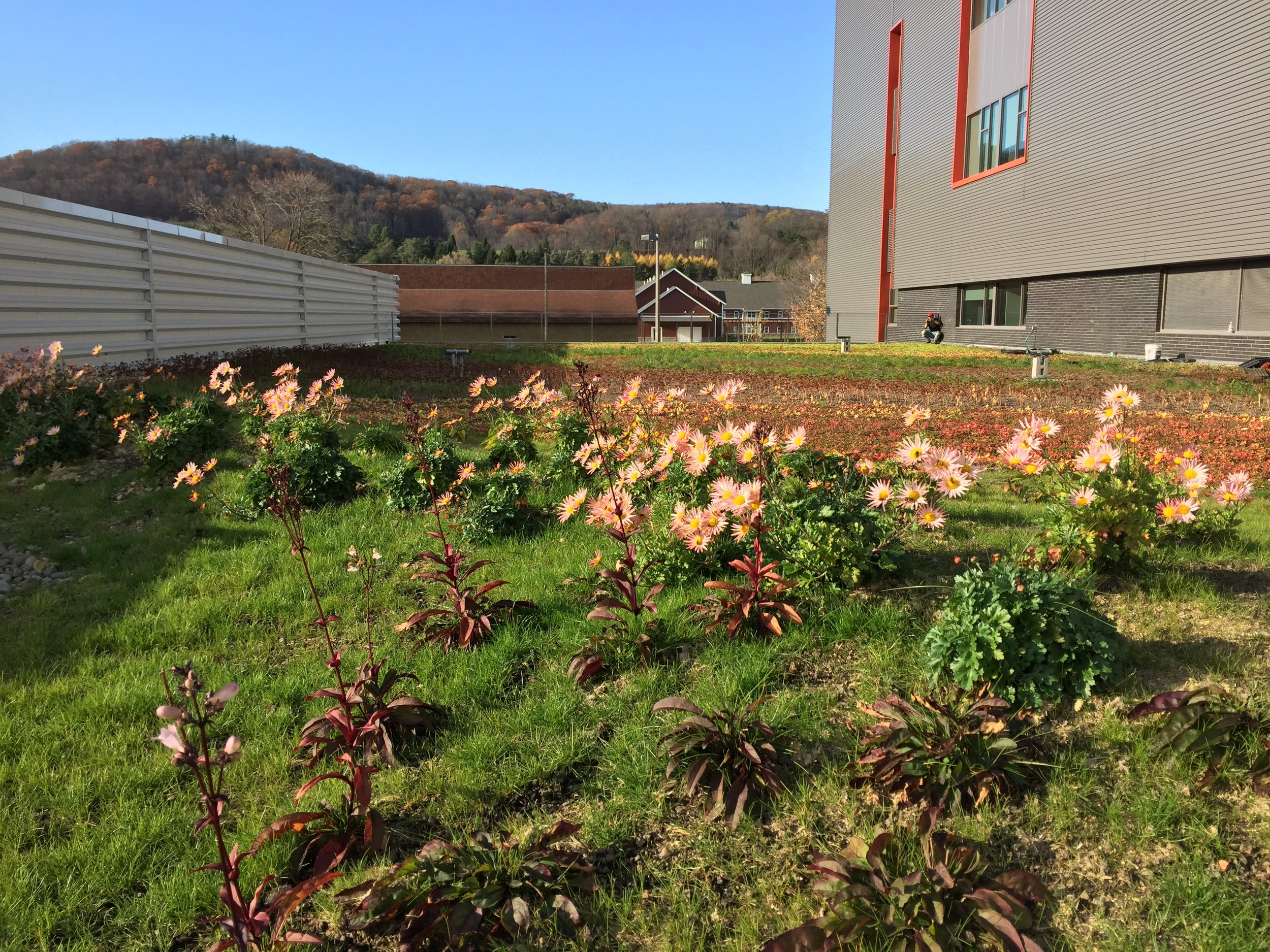recover-green-roofs-SUNY-cobleskill-2014-15.JPG