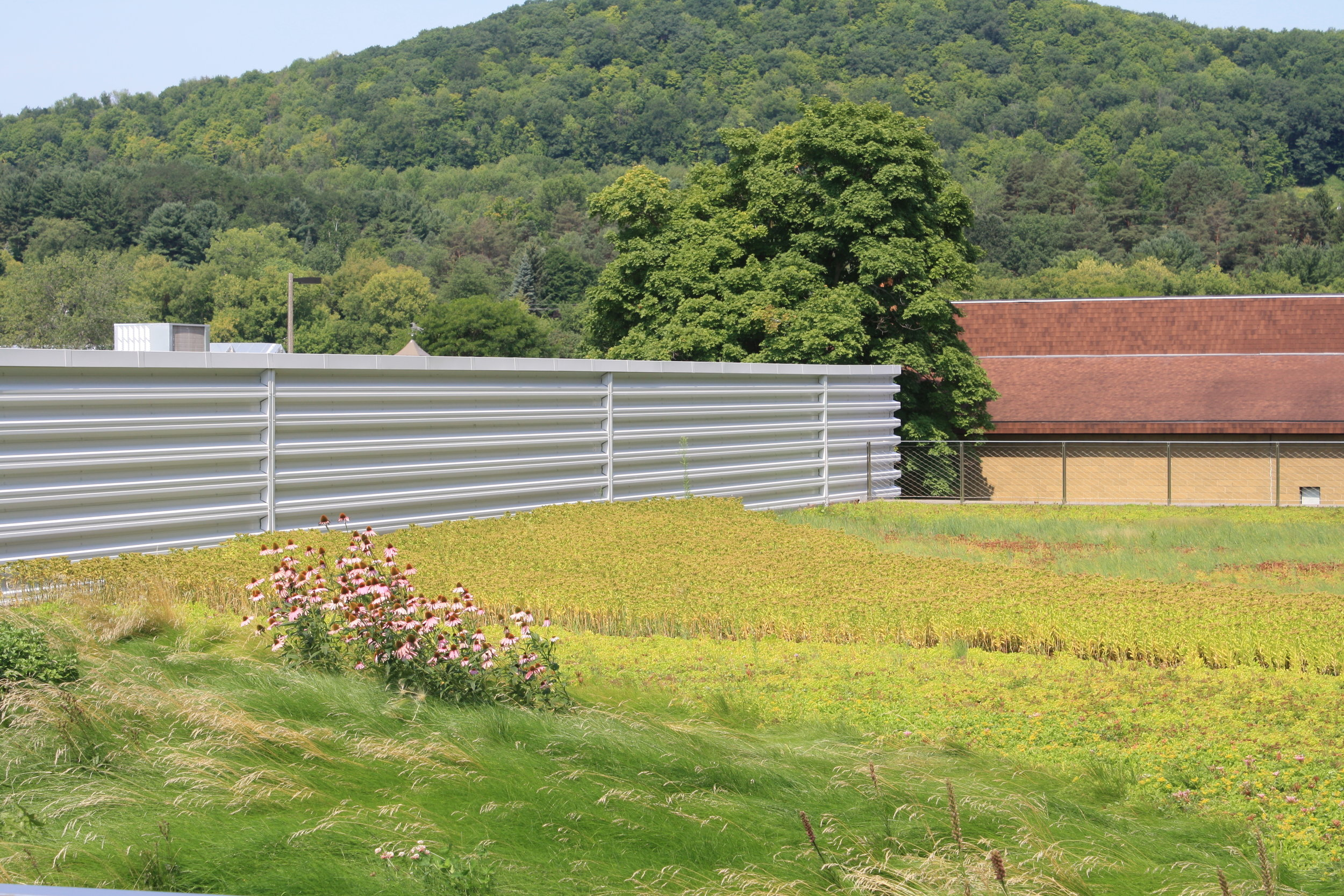 recover-green-roofs-SUNY-cobleskill-2014-27.JPG