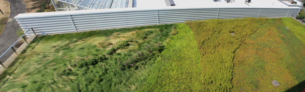 recover-green-roofs-SUNY-cobleskill-2014-2.jpg
