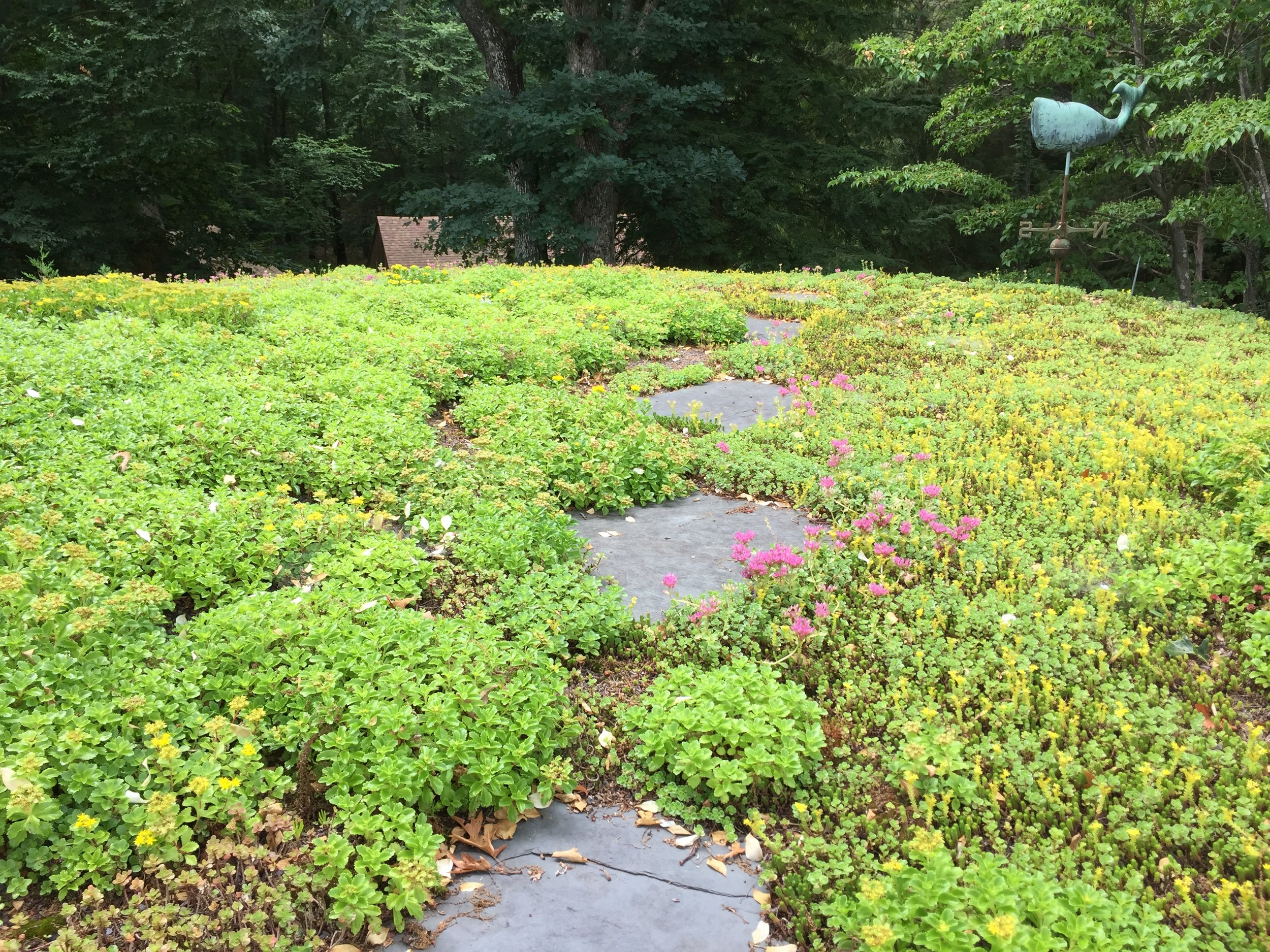 recover-green-roofs-turtle-bay-2016-9.jpg
