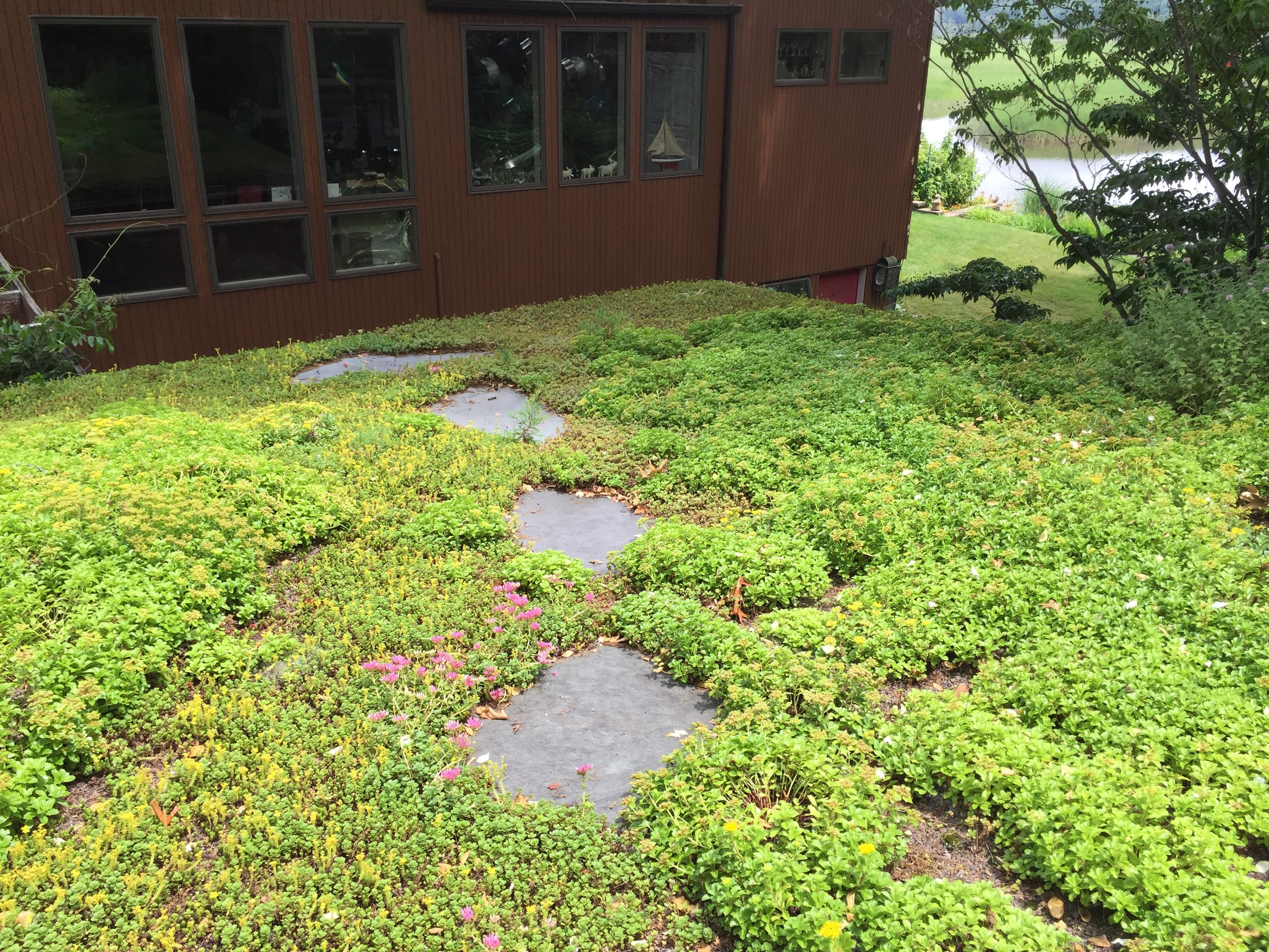 recover-green-roofs-turtle-bay-2016-26.jpg