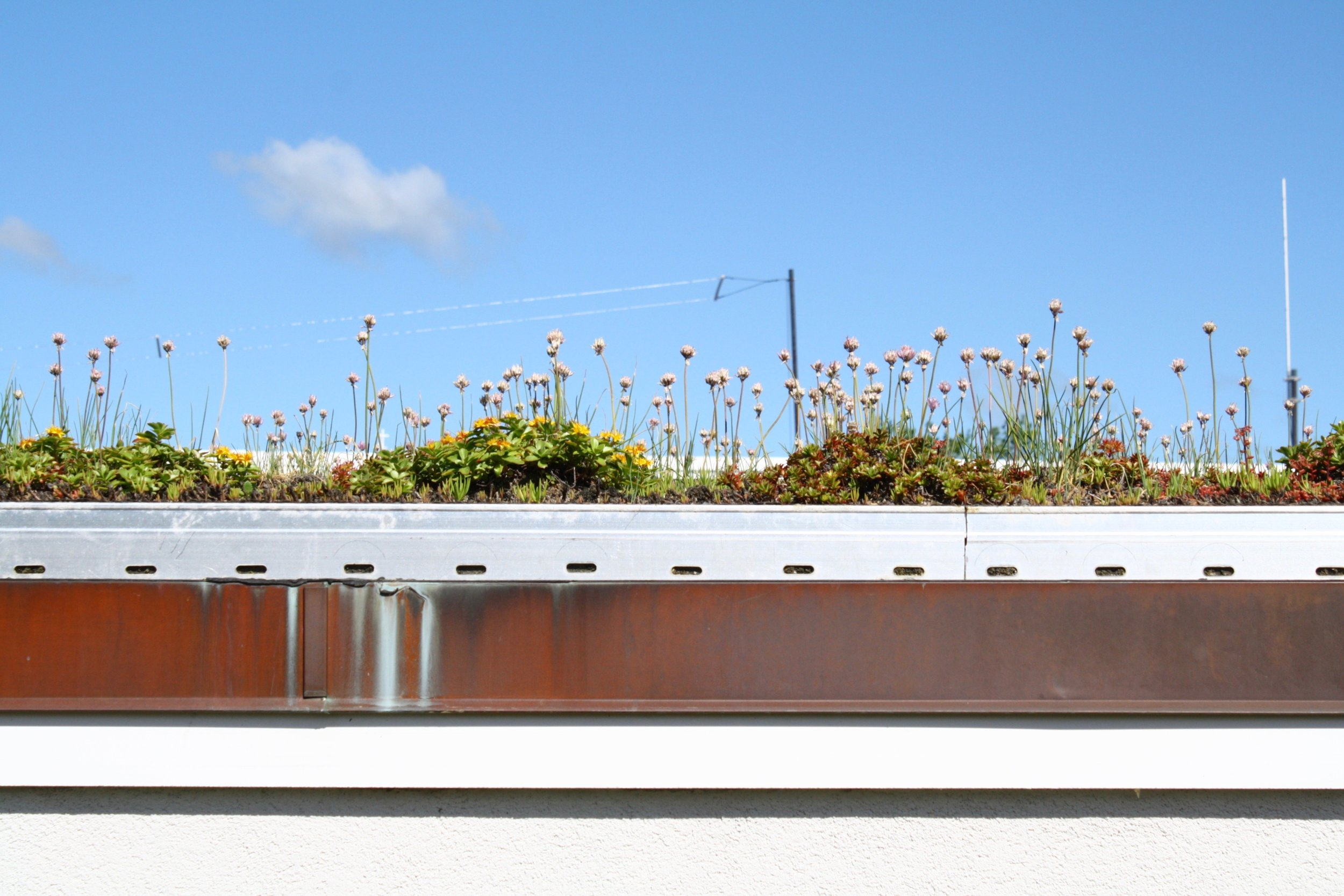recover-green-roofs-whipple-riverview-2016-3.jpg