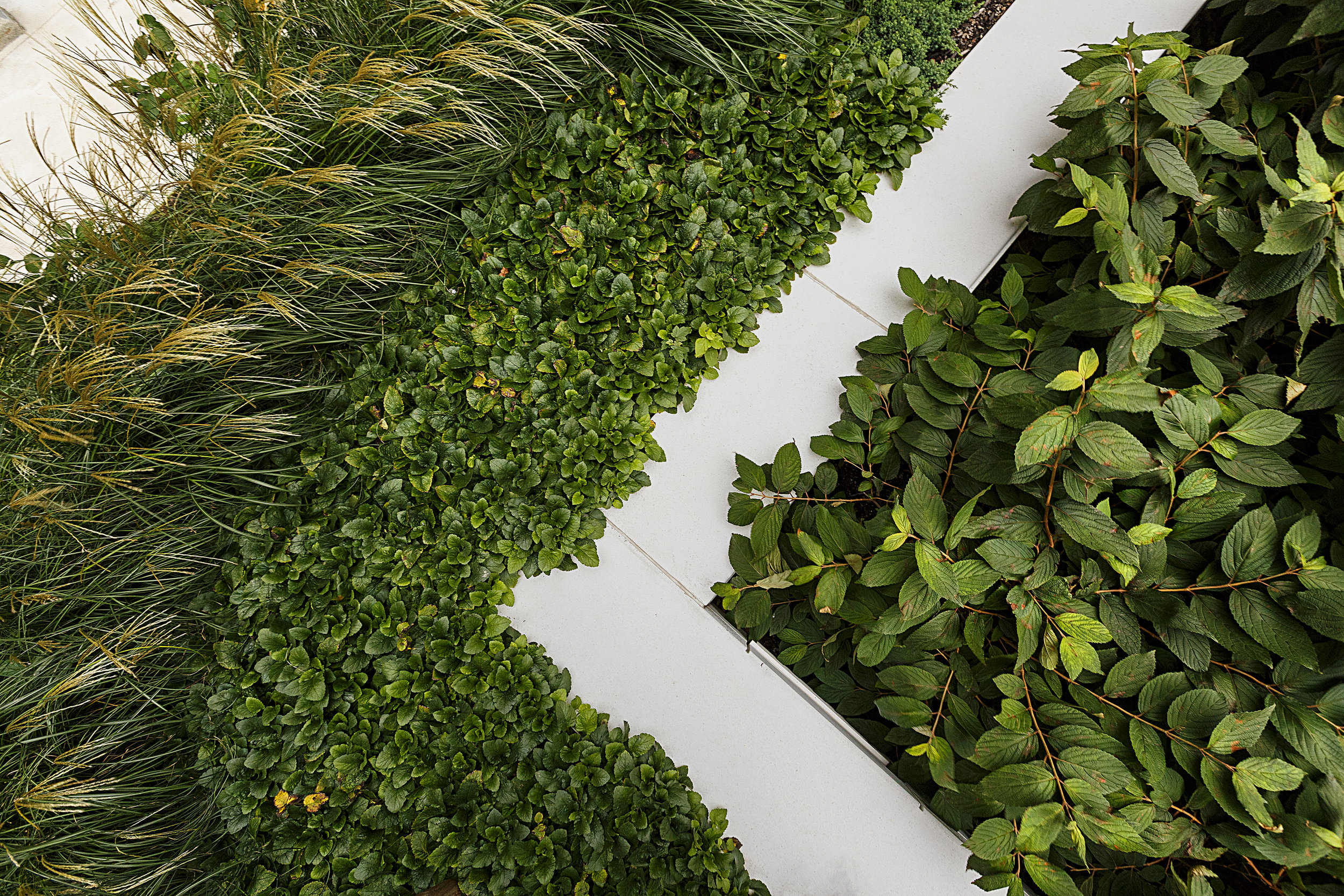 recover-green-roofs-patrick-rogers-photography-montaje-courtyard-skydeck-11-2018-2.jpg
