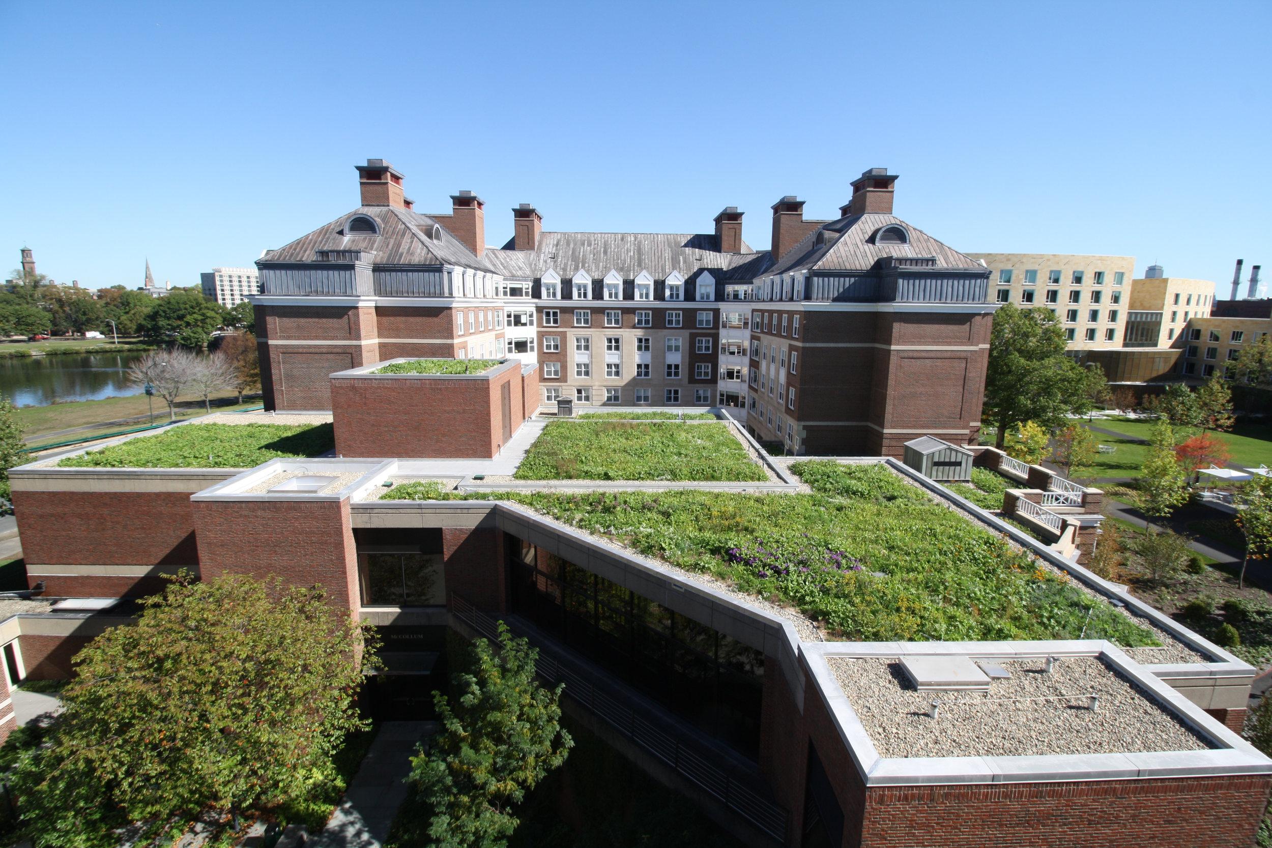 recover-green-roofs-harvard-business-school-garden-2017-18.jpg