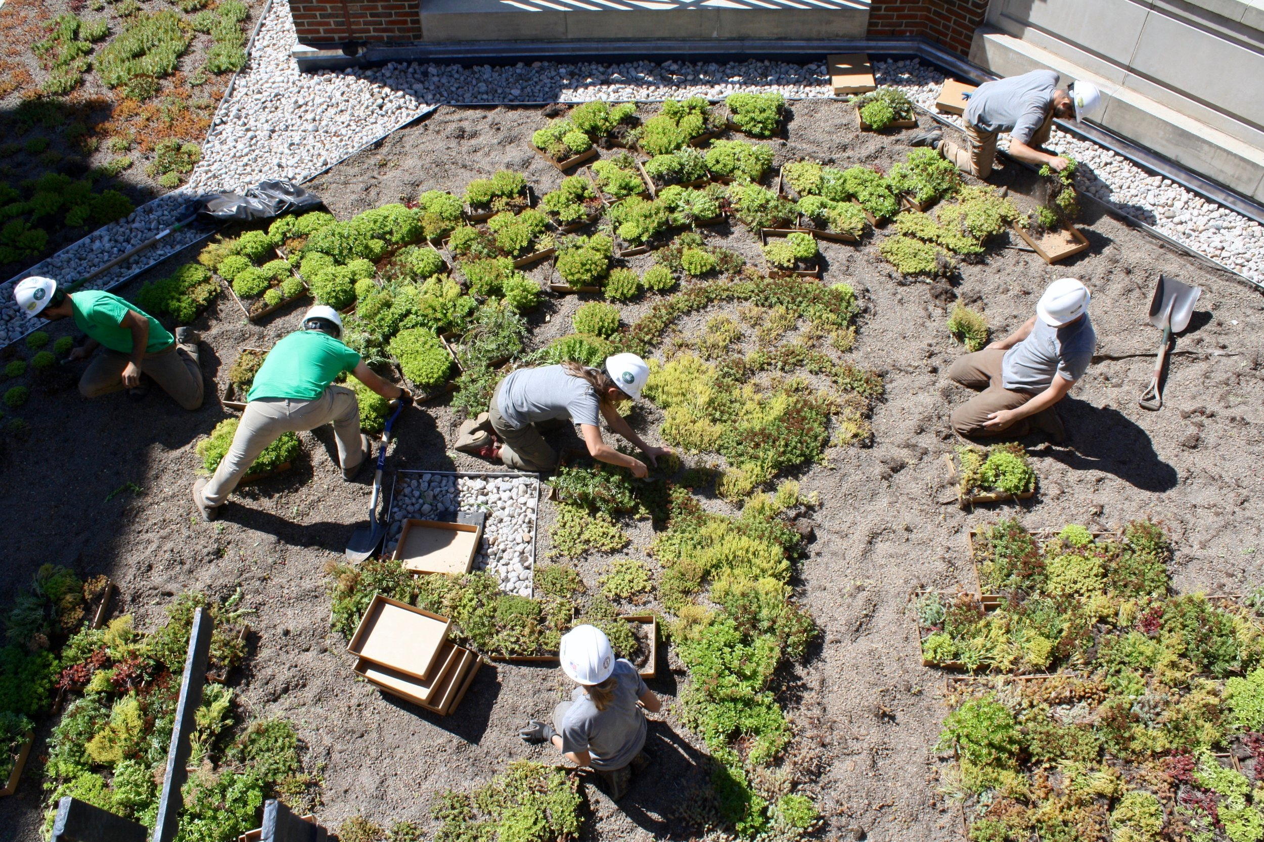 recover-green-roofs-harvar-business-school-rooftop-garden-2016-24.jpg