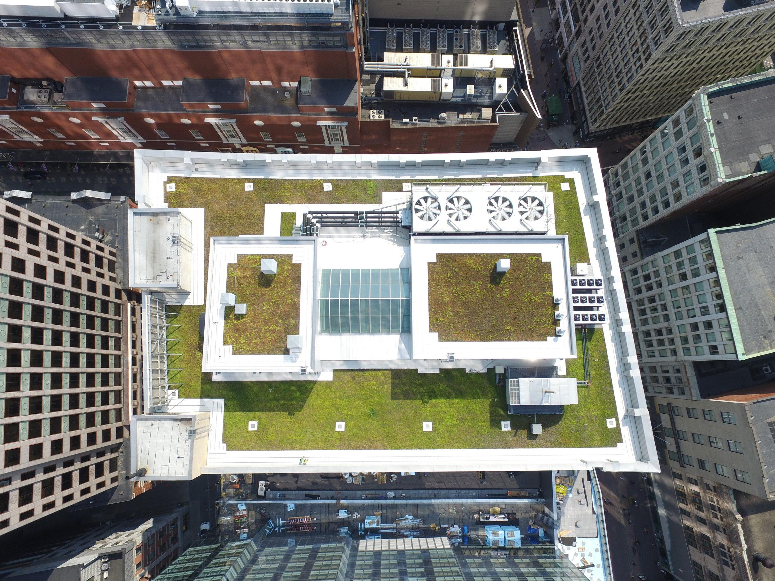 recover-green-roofs-burnham-2016-5.JPG