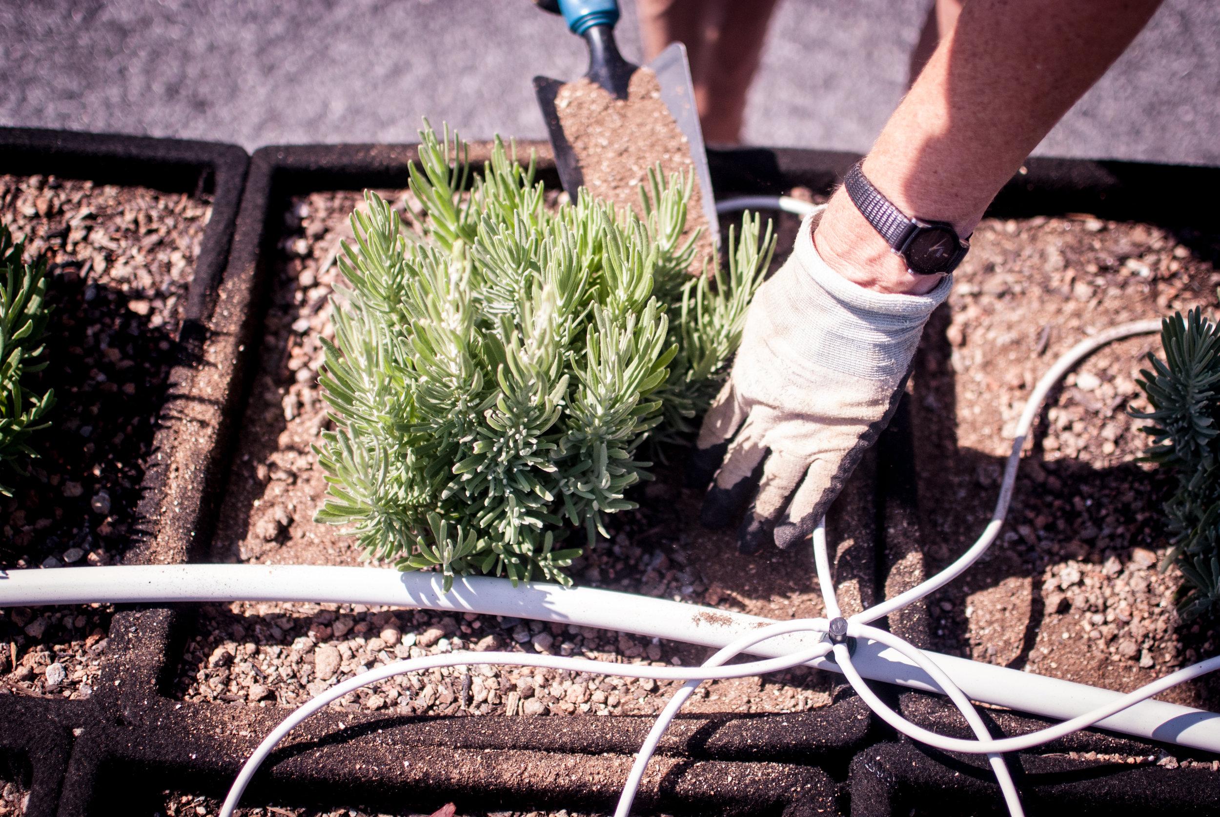 garden makers (KAYLA)-5.jpg