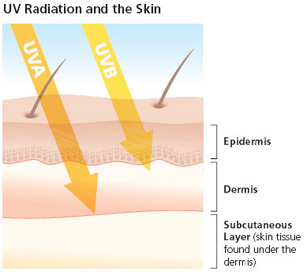 Image from SkinCancer.Org - click the image to read more information on UVA & UVB rays.