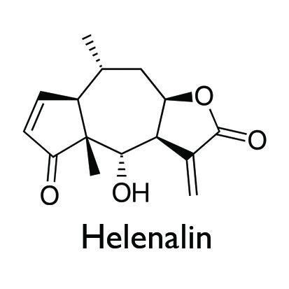 Helenalin Image.jpg