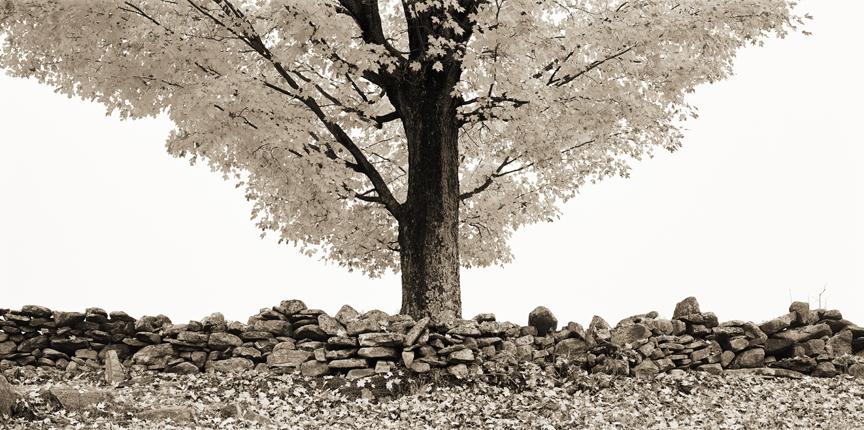 Tree 96 dpi smaller size.jpg