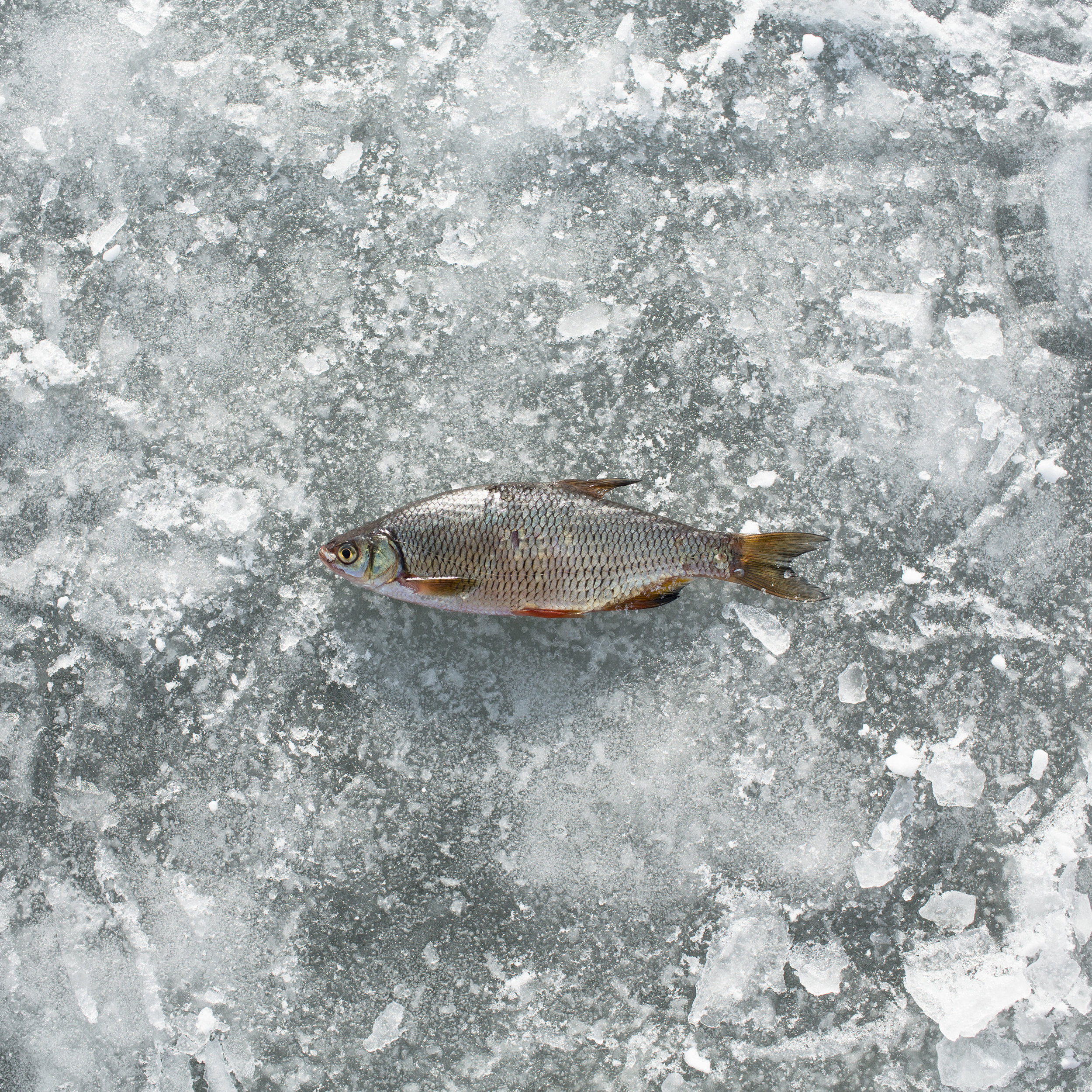 Photograph by Federico Pardo, from the exhibit  Ice Shanties: Fishing, People and Culture.