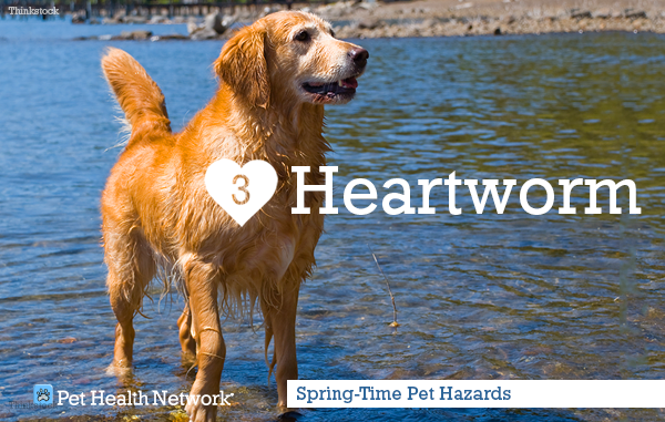 3-heartworm146723705_0.png