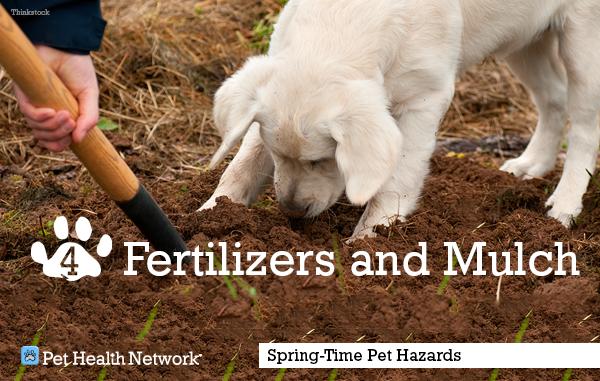 4-fertilizer-mulch154079563_0.png