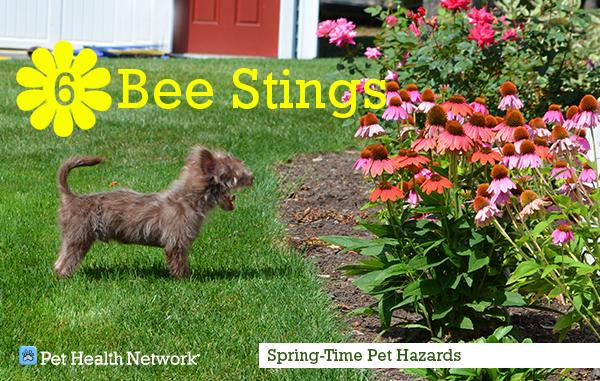 6-bee-stingstorihoule_0.png