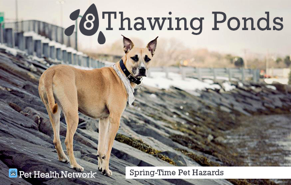 8-thawing-pondcaitkimball_0.png