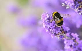 precious bee.jpeg