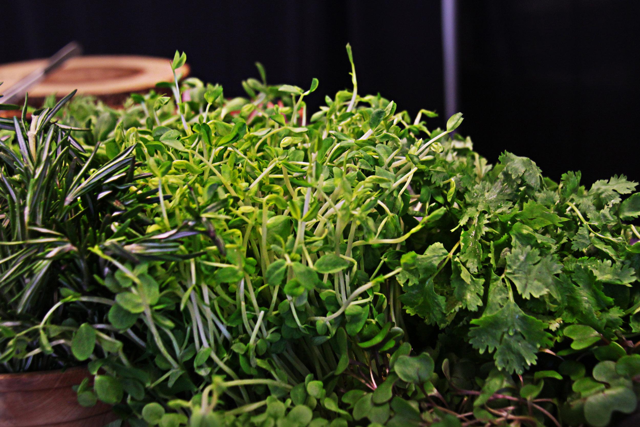 greens IMG_9503.JPG