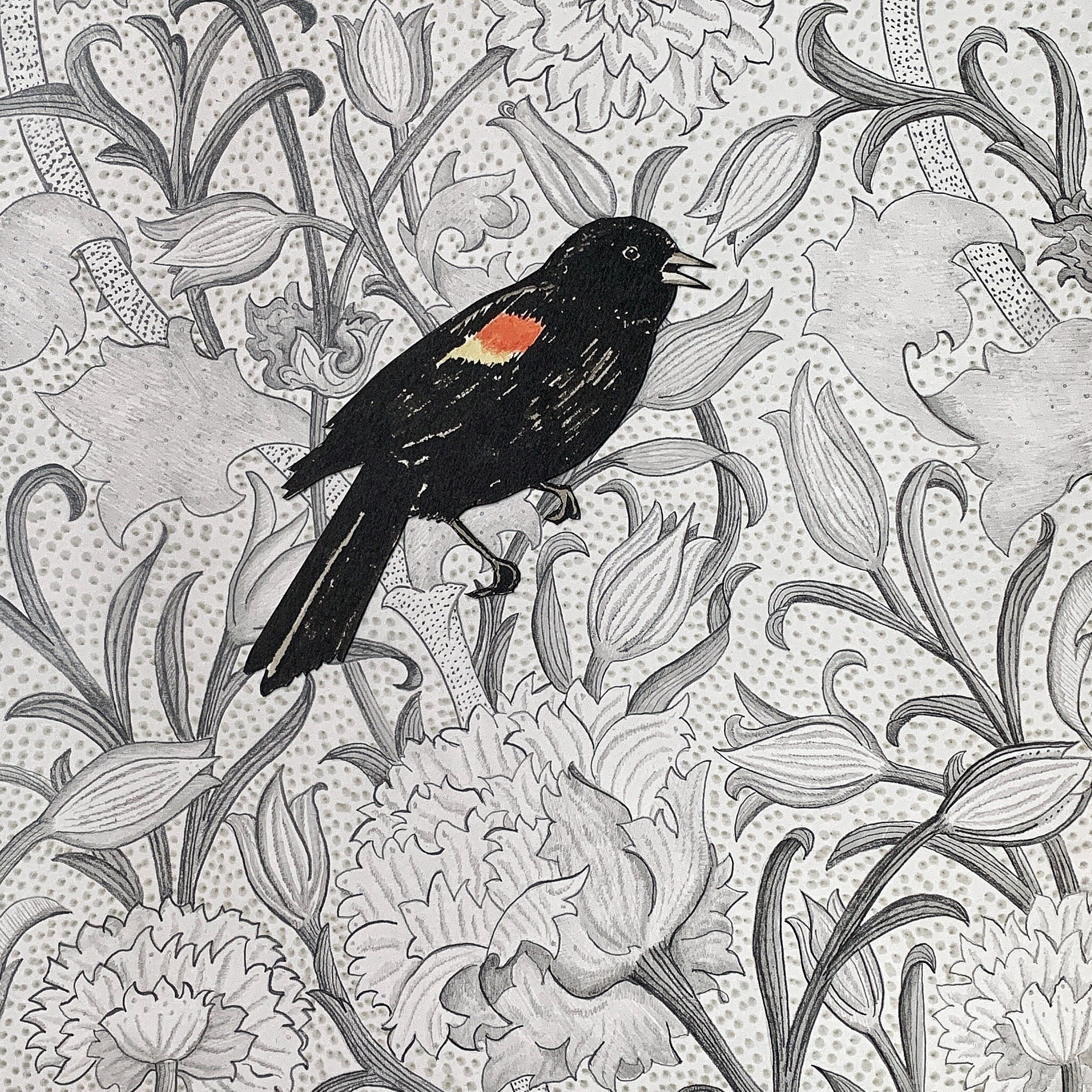 Red-Winged Blackbird , 2019 graphite and ink on paper