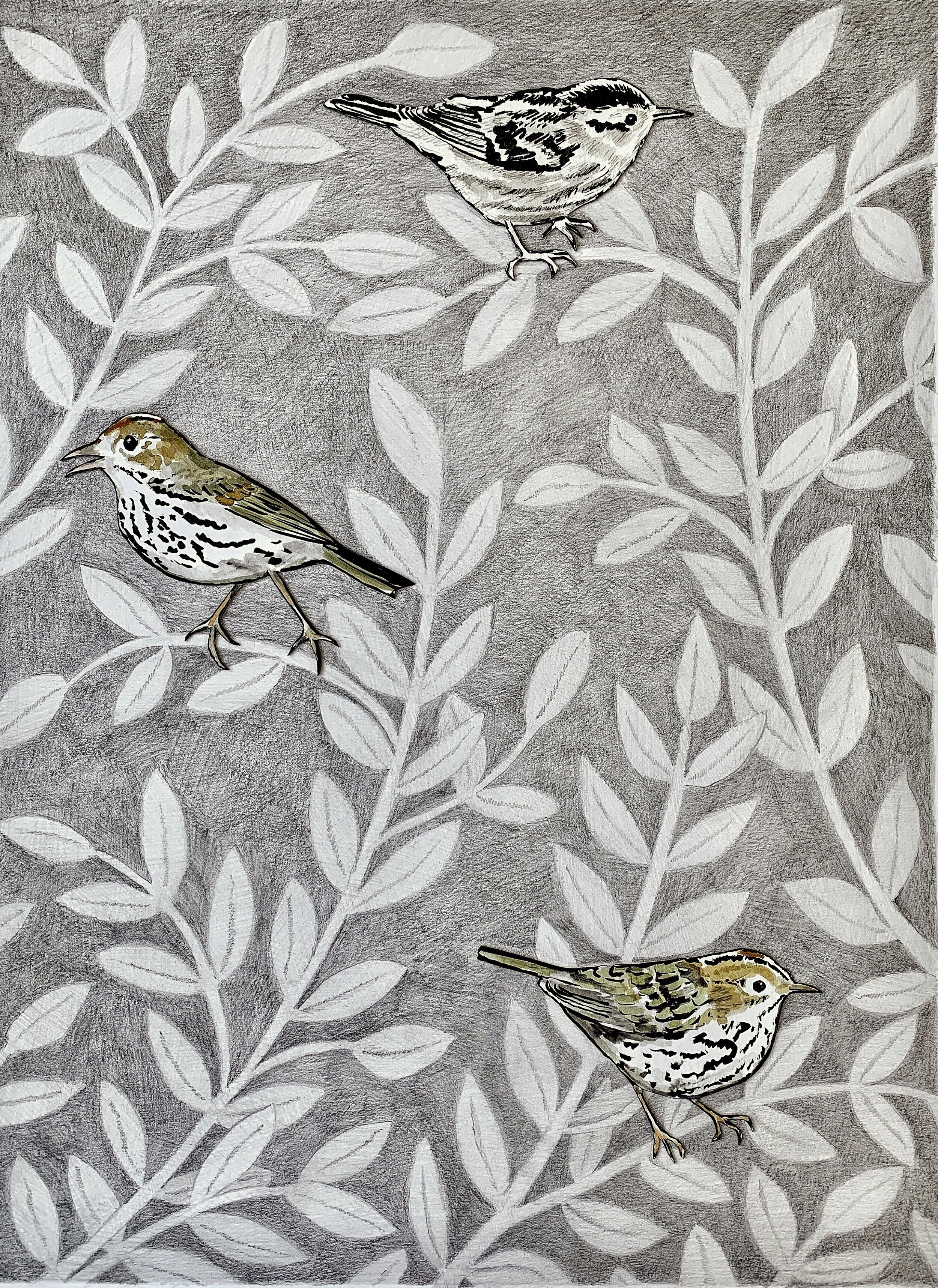 Oven Birds and a Black and White Warbler , 2019 graphite and ink on paper