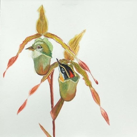 Curiobird1.jpg