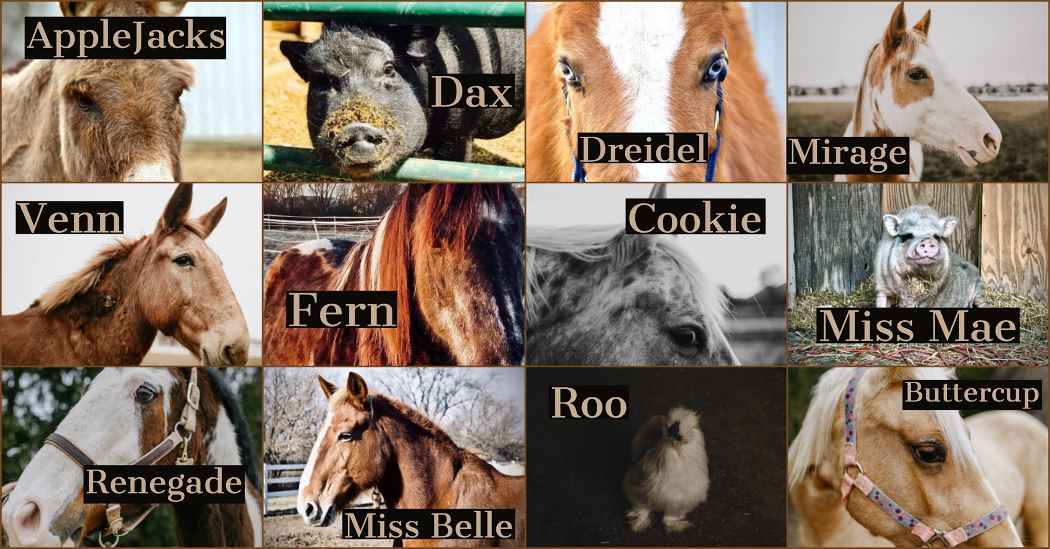 Choose your favorite animal... - ...receive his or her unique story and a downloadable photograph right in your email. Printed photos will be available for pickup.
