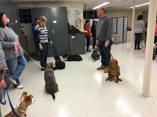 bad weather? free dog training is held indoors at bartlett with k9 wizard rob mullin