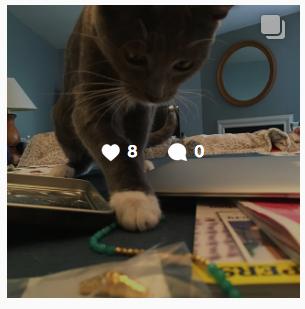 Follow Bailey the kitten on Instagram! - Click here!