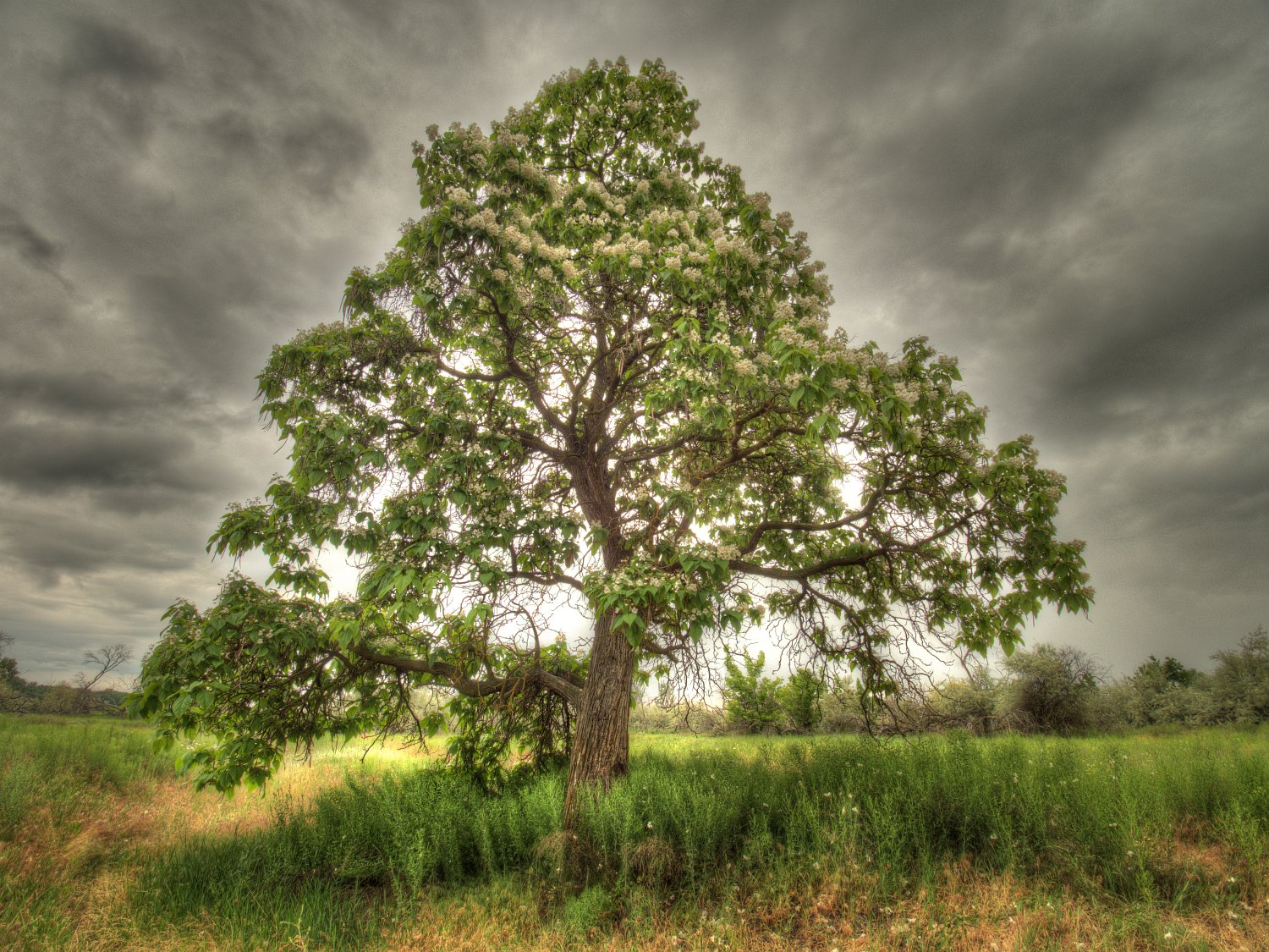 The Wishing Tree - A highly processed 'artistic' photograph.