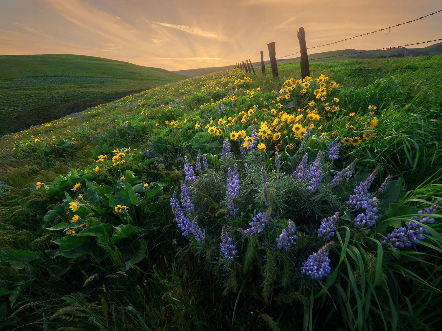 Columbia Basin Wildflowers, Available for  purchase .