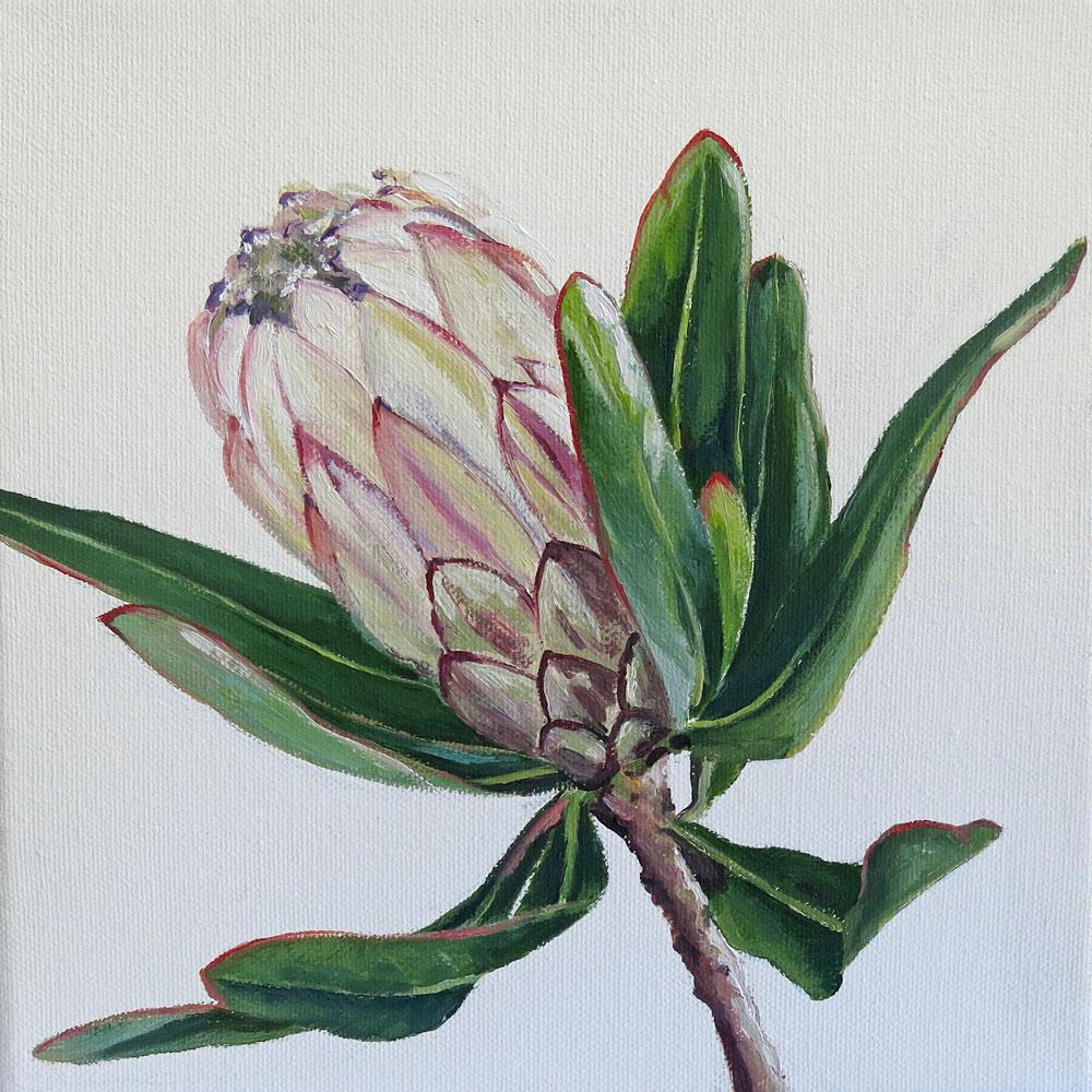 Vanilla Protea