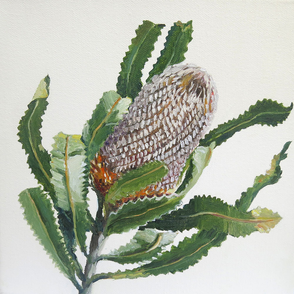 Faded Banksia