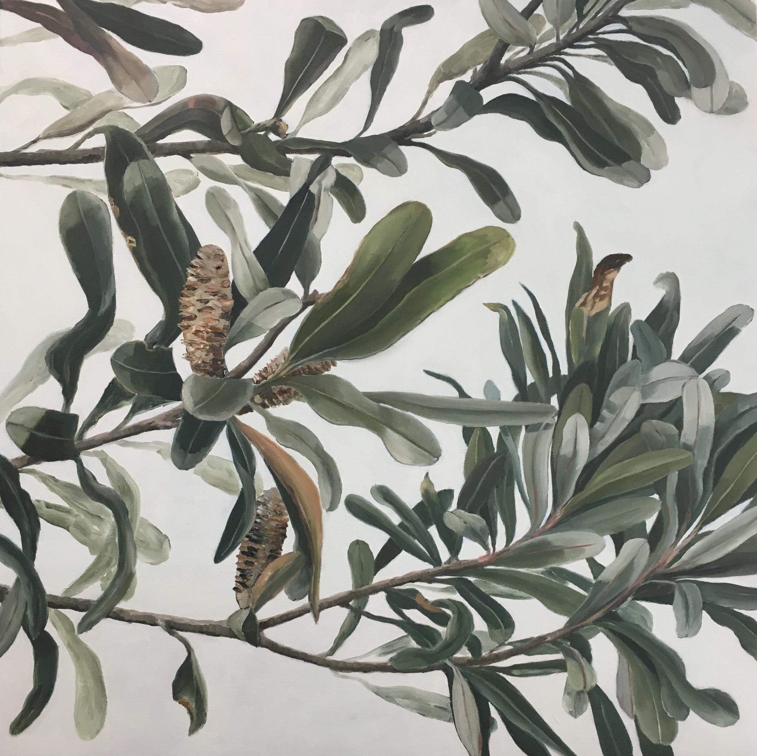 Banksia Foliage