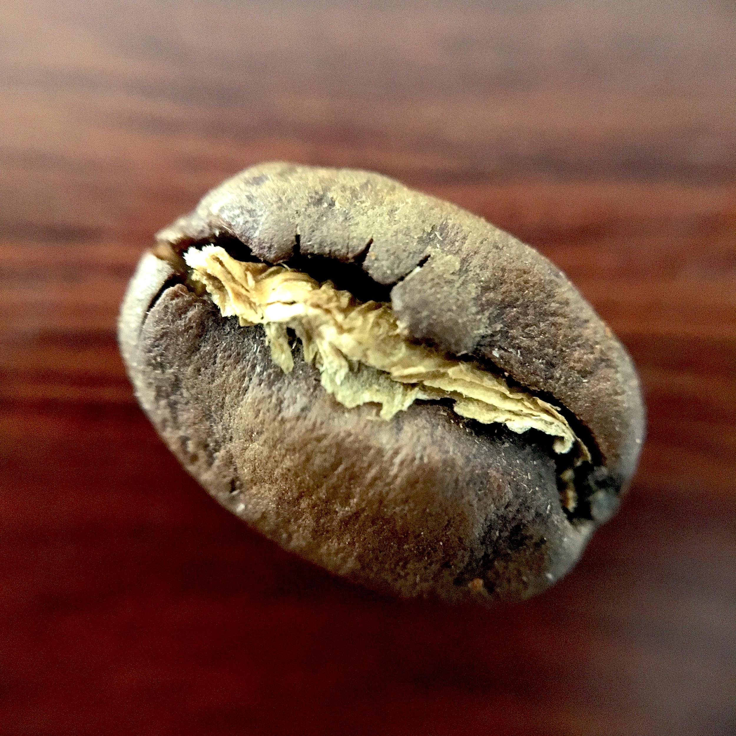 Heirloom Varietal Bean