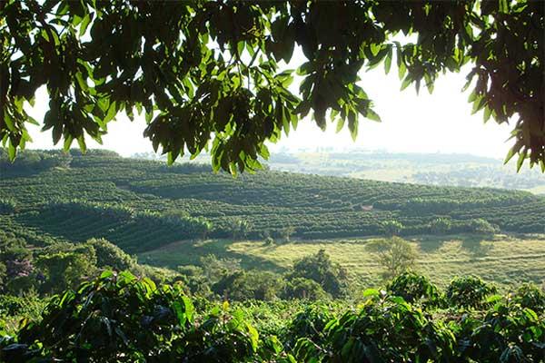 Fazenda São José da Boa Vista, Credits: Peixoto Coffee