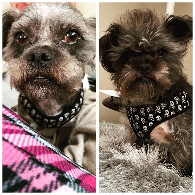 There are 2 things literally no one is interested in hearing about: the dream you had last night, and your pet. Loophole: before and after grooming pics! My baby looks so gooooood #dogsofinstagram #dogoftheday #dogstagram