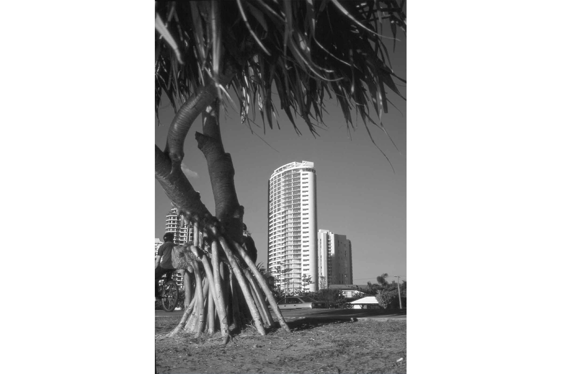 BW-TREE-SHOT-LIBERTY-FOR-WEB.png