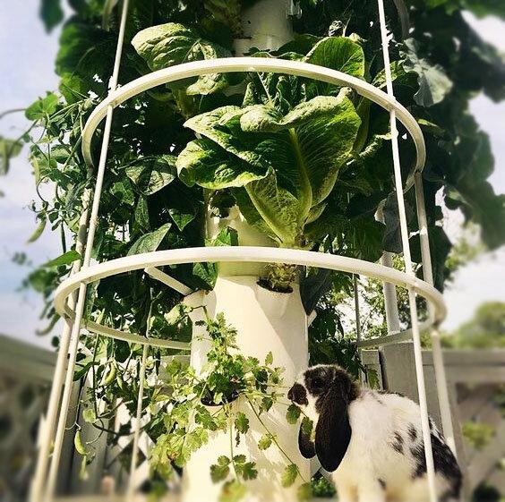 Vertical_Garden_Shop_DIY_.jpeg