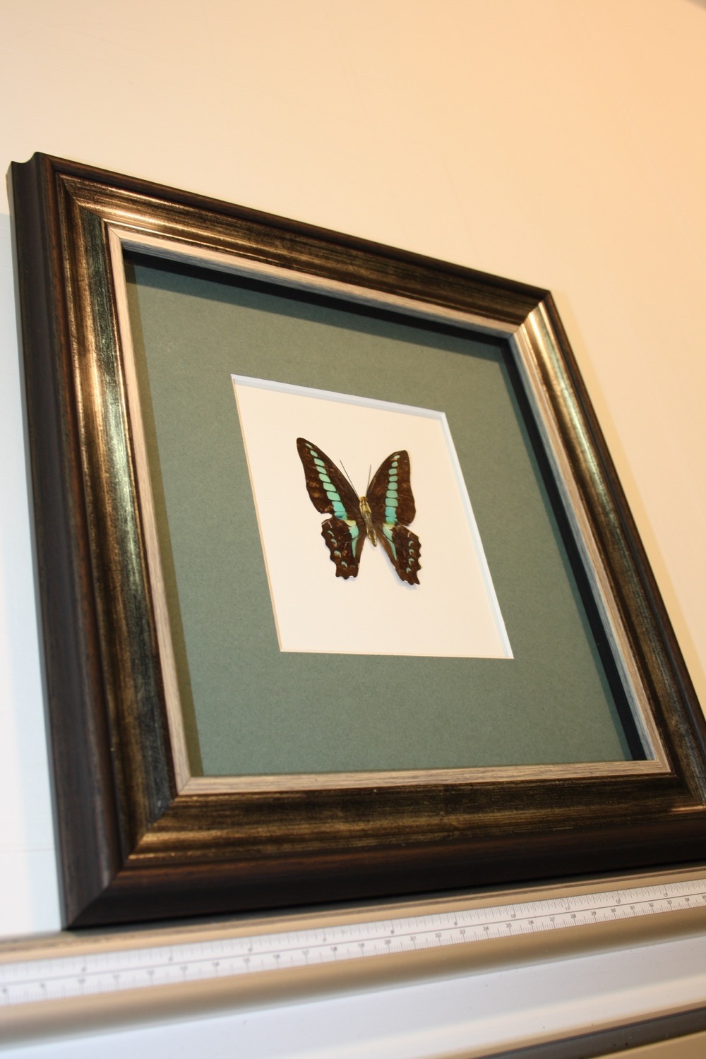 hampshire-picture-general-framing-021.JPG