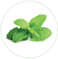 """PEPPERMINT LEAF        0   0   1   20   117   L'Oreal USA   1   1   136   14.0           Normal   0           false   false   false     EN-US   JA   X-NONE                                                                                                                                                                                                                                                                                                                                                                    /* Style Definitions */ table.MsoNormalTable {mso-style-name:""""Table Normal""""; mso-tstyle-rowband-size:0; mso-tstyle-colband-size:0; mso-style-noshow:yes; mso-style-priority:99; mso-style-parent:""""""""; mso-padding-alt:0in 5.4pt 0in 5.4pt; mso-para-margin:0in; mso-para-margin-bottom:.0001pt; line-height:115%; mso-pagination:widow-orphan; font-size:11.0pt; font-family:Arial; color:black;}   Peppermint leaf is awesome - it's infused with antioxidants and vitamins and has traditionally been used in teas to soothe digestive issues"""