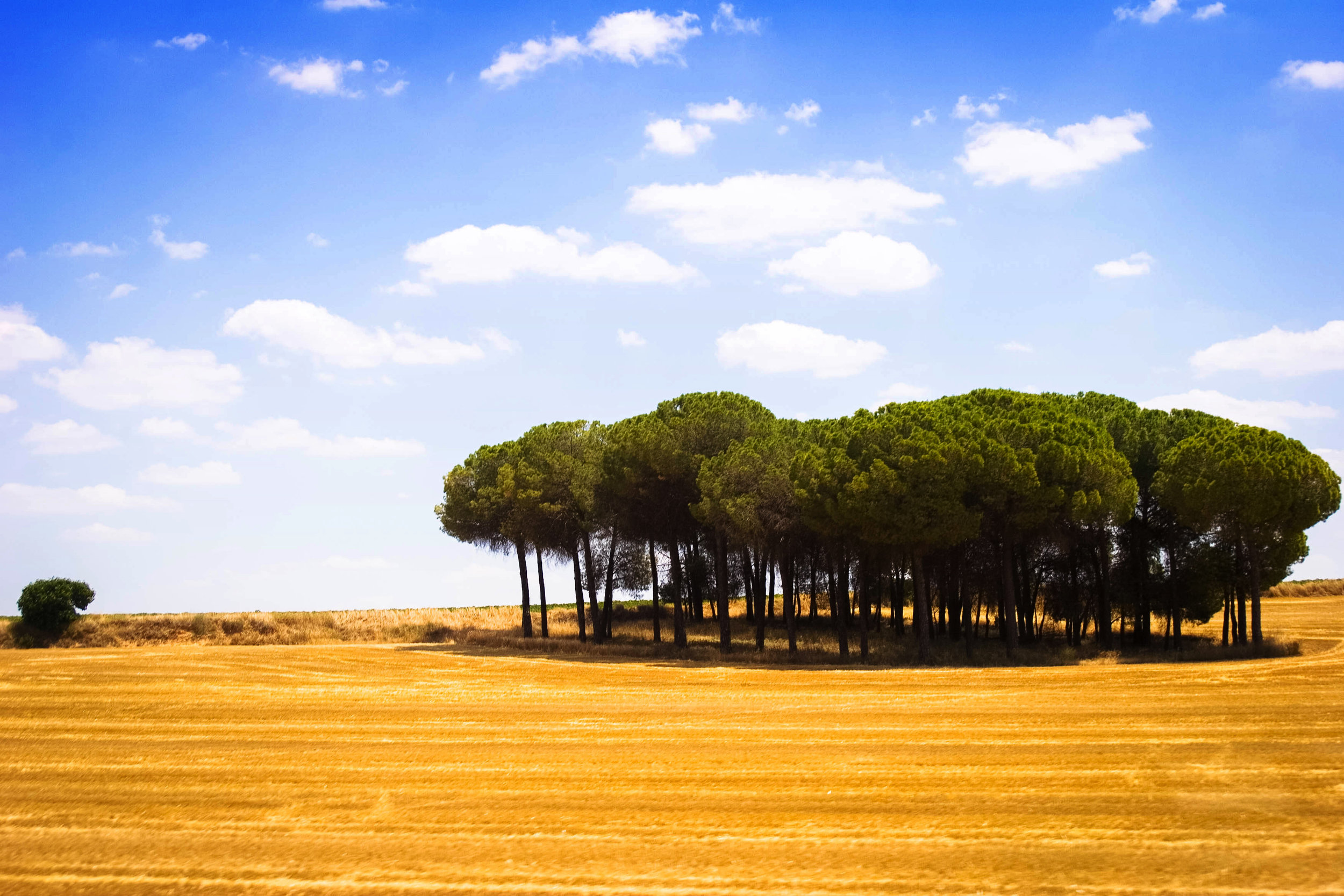 Roadside grove
