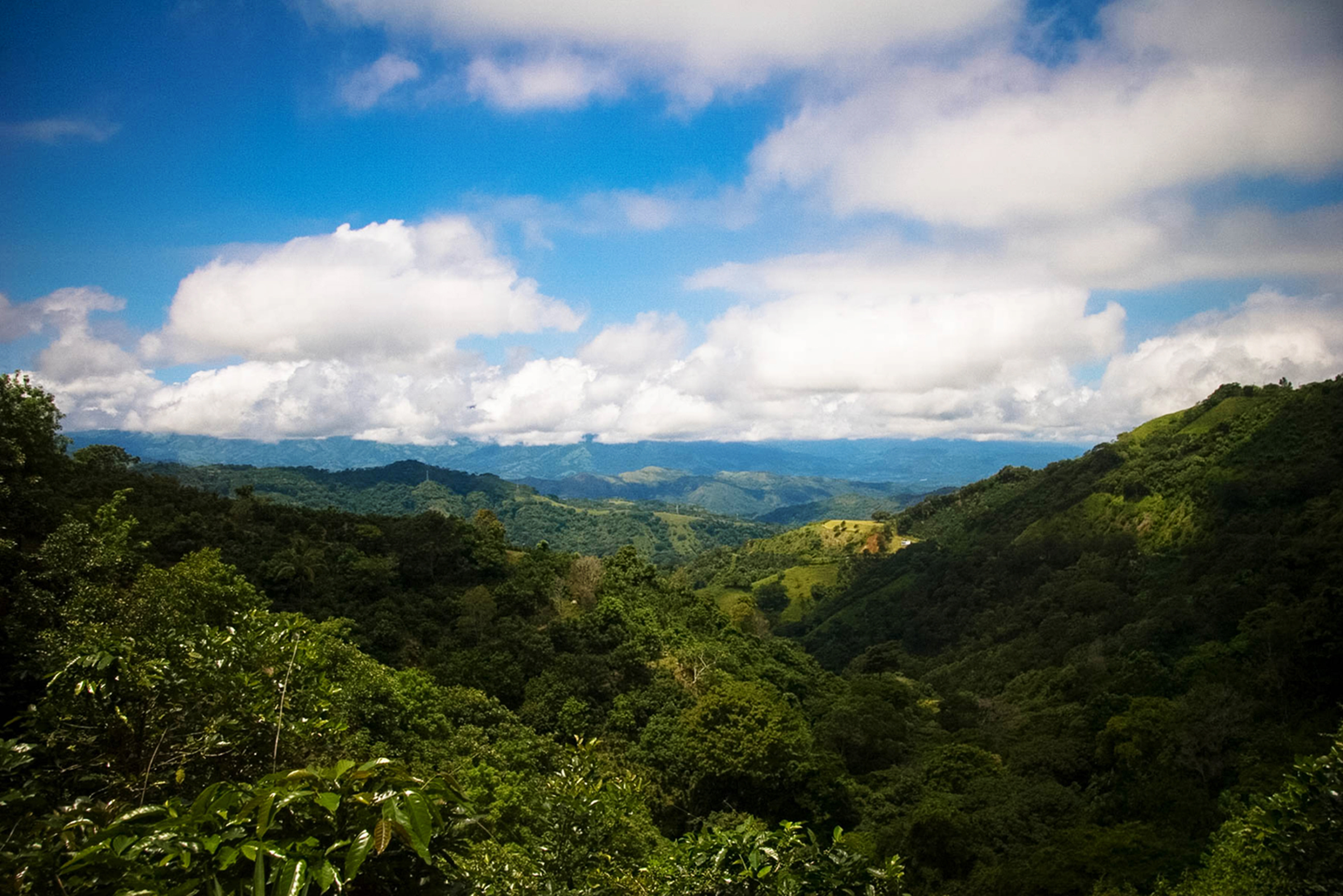 Rolling mountains with coffee plants, Parque Manuel Antonio