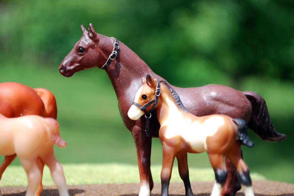 foal_0198.jpg