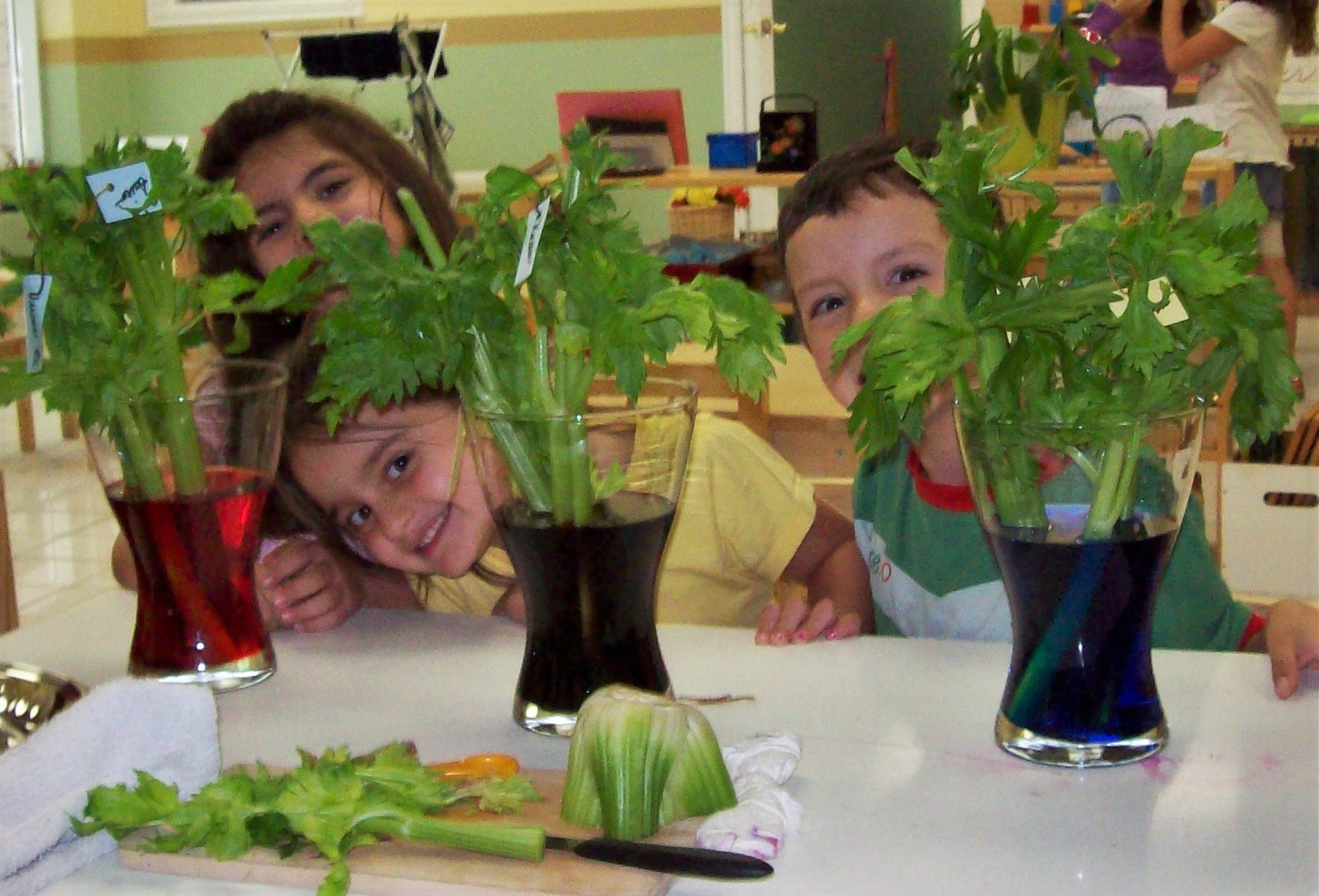 Chidren helping with indoor gardens at Kaban Montessori in Mississauga.
