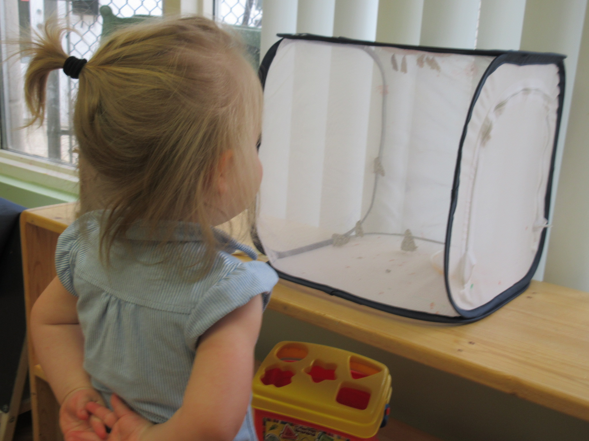 Observing Nature in the Toddler Classroom