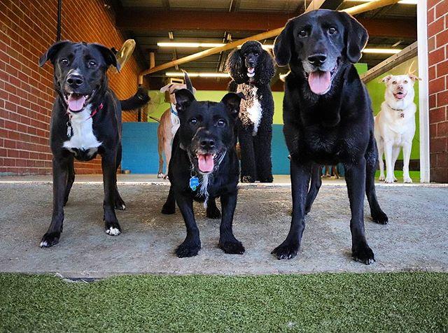 Fetch Squad 🎾 . . #throwitthursday #happythursday #fetchsquad #readyforfetch