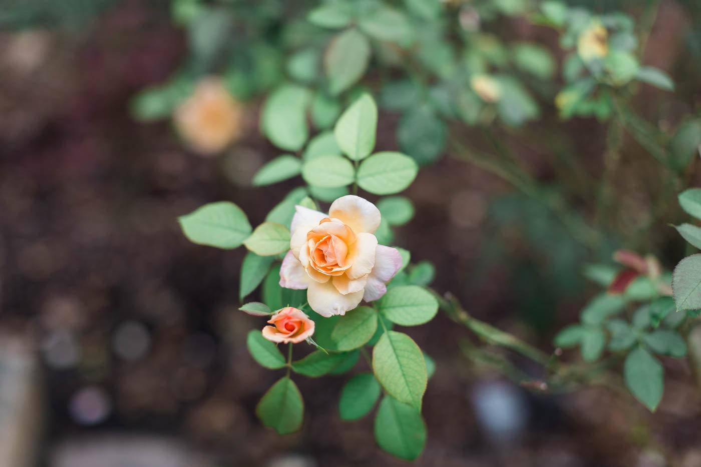 chelsea and chris- dallas arboretum garden wedding-82.jpg