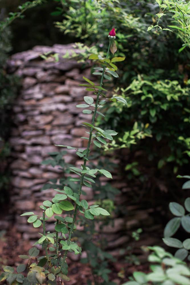 chelsea and chris- dallas arboretum garden wedding-85.jpg