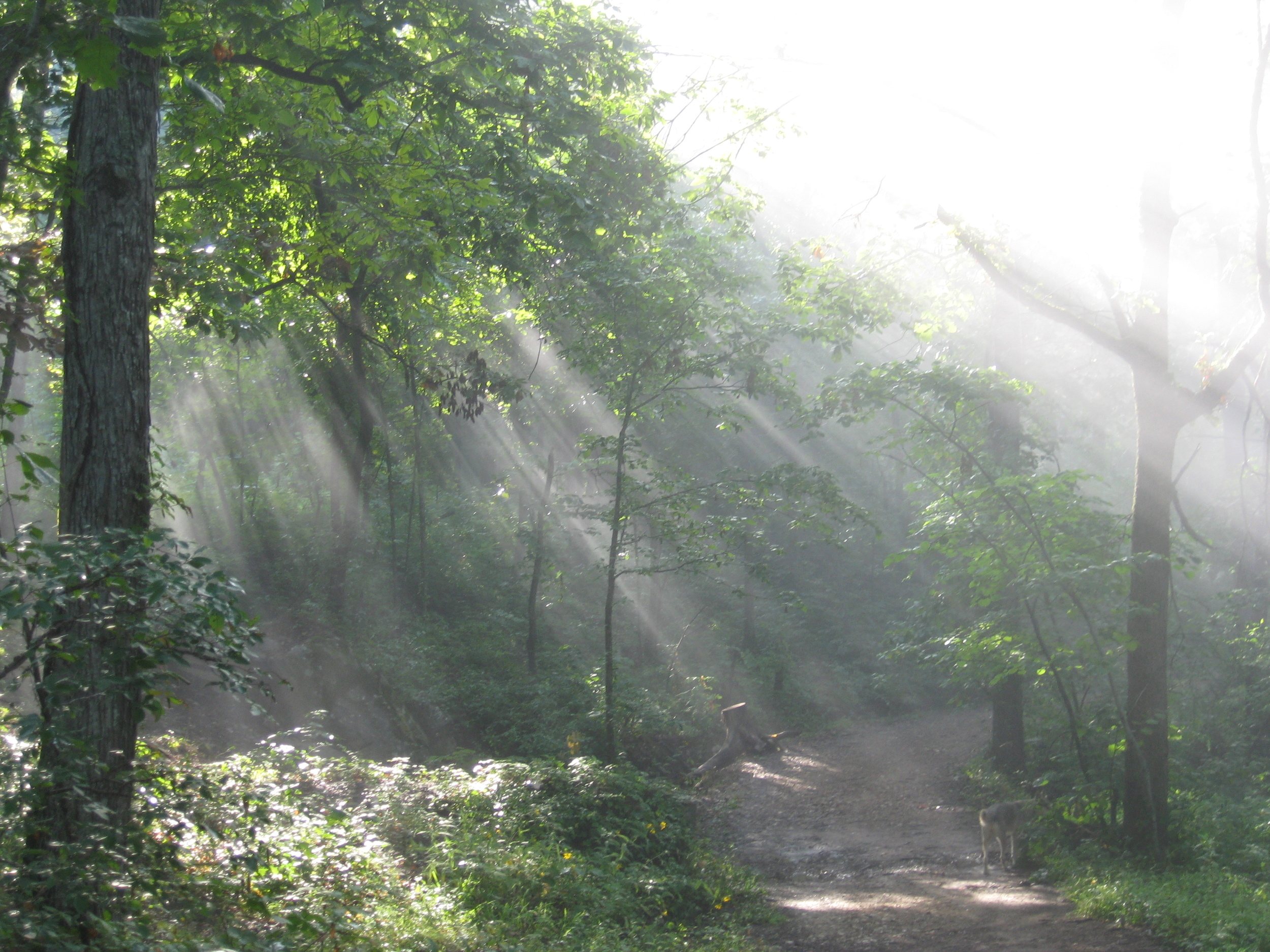 The Path on The Sacred Land