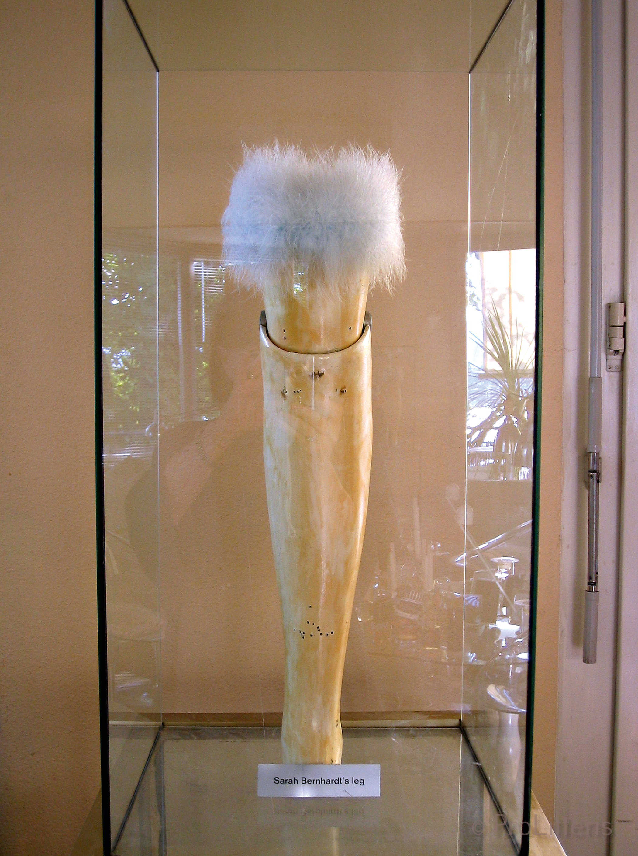 Sarah Bernhardt's Leg 1999